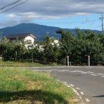 近所のりんご畑