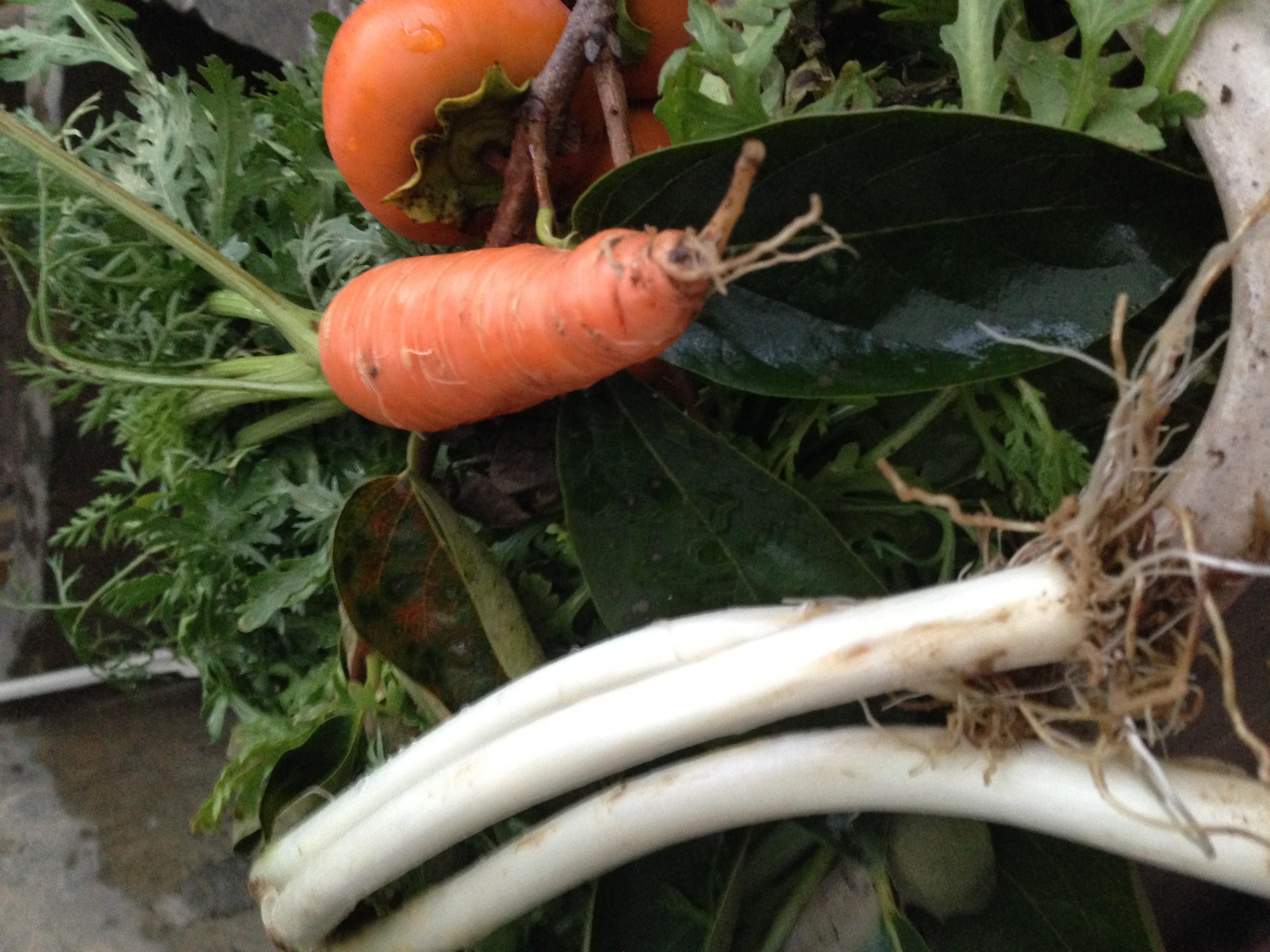 庭で採れた野菜 9/30